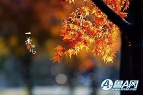 今日霜降,不妨去看看那弥漫暖意又绚烂的红叶...